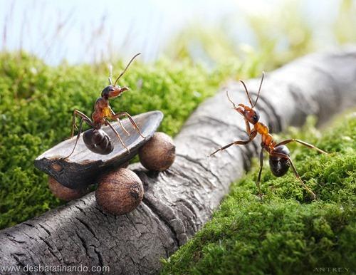 formigas inacreditaveis incriveis desbaratinando  (14)