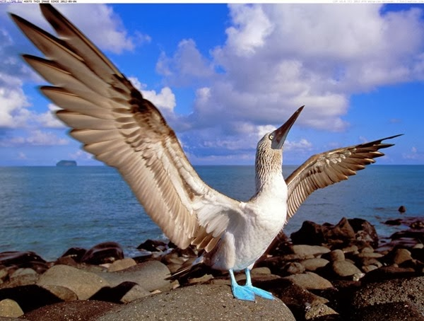 blue-footed-booby-galapagos-islands-ecuador-1024x775