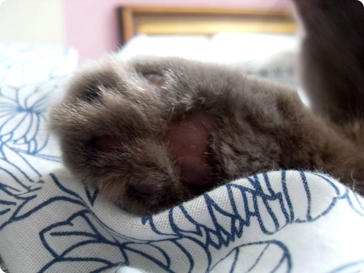 Bløde kattepoter