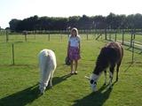 2013.08.20-037 Stéphanie et les lamas