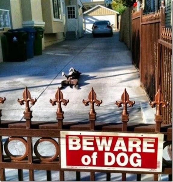 dogs-best-friend-006