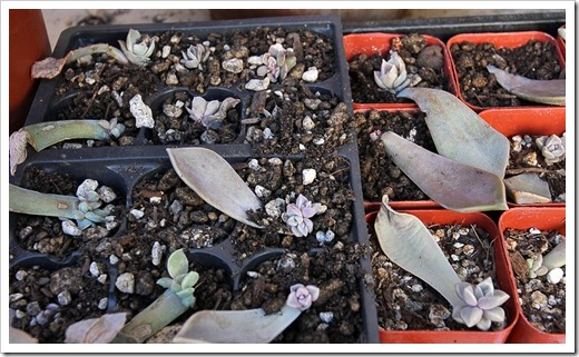 120202_leaf-cuttings3