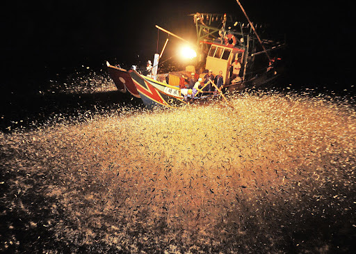 [The Big Picture] Cuộc thi ảnh của National Geographic 2012, Phóng sự ảnh