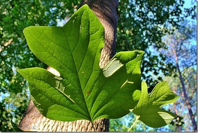 Two leaves - art