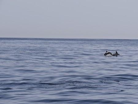 24. Delfini in larg.JPG