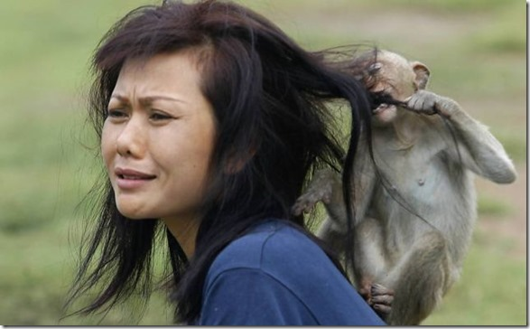 animals-behaving-badly-1