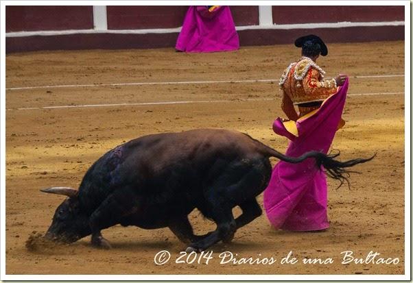 Toros 2014 (2)-23