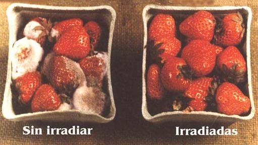 frutillas IRRADIADAS