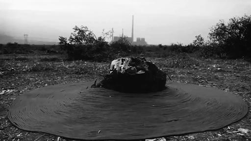 Yırca'daki 'Ölmez' Ağaçları