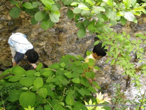 川でサワガニ探し