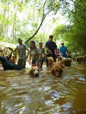 Pets adventure 16 (139)
