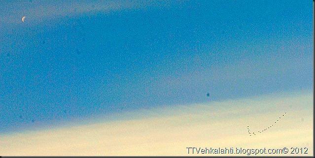 aamu lintuja kuu M koski 011