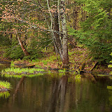 Small Pond in the Spring / Porcupine Mountains State Park Wilderness Area / Western edge of Upper Mi on Lake Superior