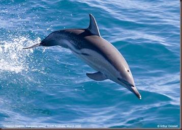 Amazing Pictures of Animals.  Dolphins, Cetacea, Delfin. Alex  (1)