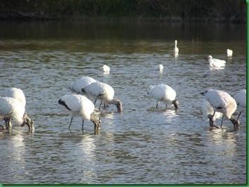Eco Pond 074