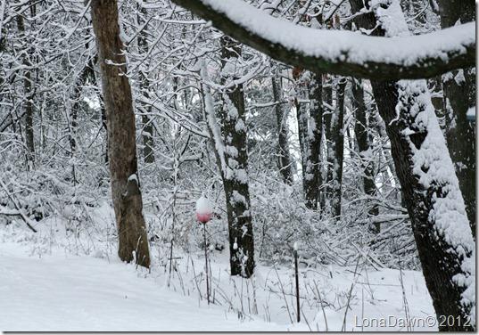 Woods_Dec292012