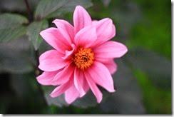 nybg-new-york-botanic-gardens-bronx-015