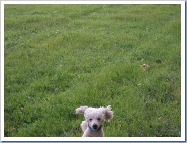20111016_dogs-running_004