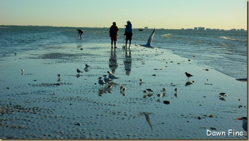 Sanibel Shell and birds_023
