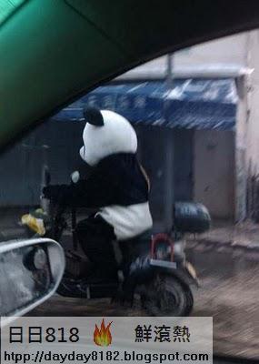 貓熊俠騎車