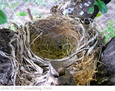 'Empty Nest Syndrome' photo (c) 2007, cursedthing - license: http://creativecommons.org/licenses/by-nd/2.0/