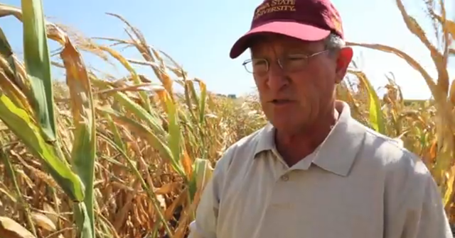 Mark Johnson, field agronomist for ISU extension, discusses the hot, dry weather that punished Iowa's crops in Summer 2013, with only 35 percent of Iowa's corn and 33 percent of soybeans rated good to excellent. Photo:  Des Moines Register