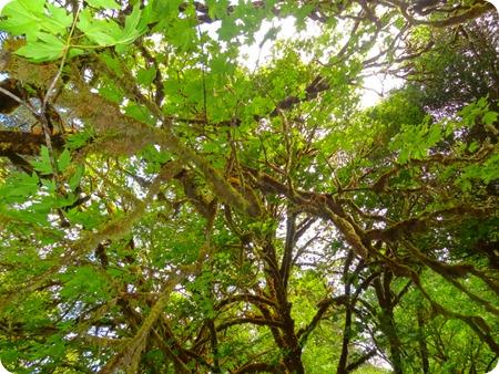 Moss on limbs