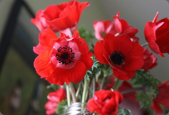 IMG_5143 floret flowers