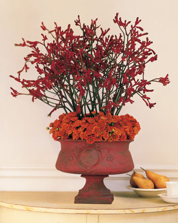 Orange and Red Arrangement: A collar of chrysanthemums in the same autumnal tone as the cast-iron urn provides a tidy transition between the container and the native Australian blooms, which can be ordered year-found from a florist.
