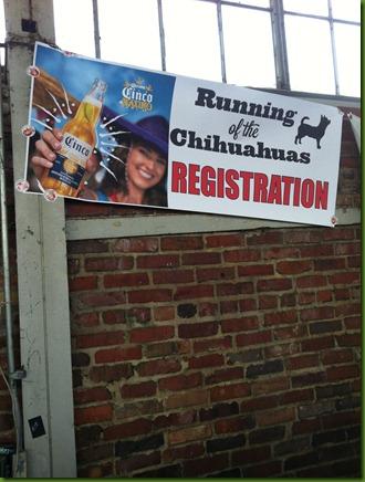 running of the chihuahua 6