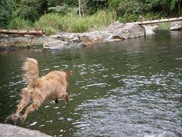 Dogs Trekking 4 (166)