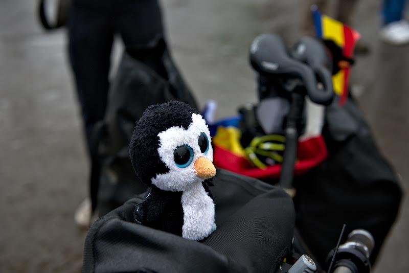 Pinguin bulbucat.