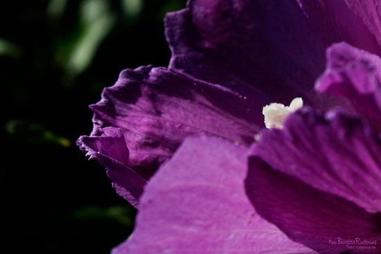 blom_20110902_macro
