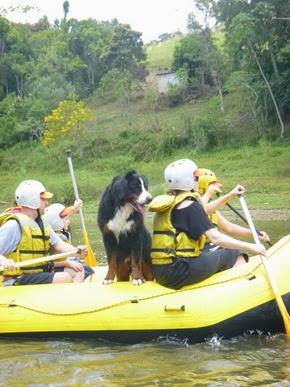 Pets adventure 17 (168)