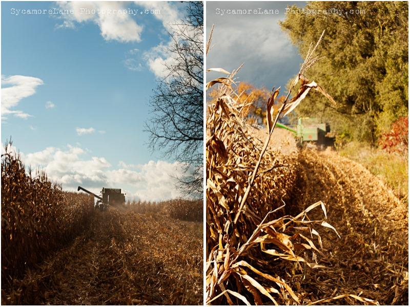 cornharvest-2