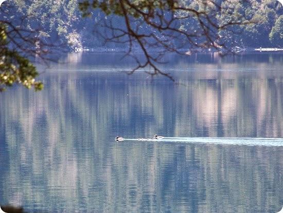 Moquehue lago