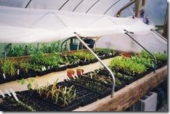 greenhouse 2a