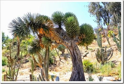 150324_SanDiego_BalboaPark_DesertGarden_032