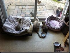 catsVSsquirrels