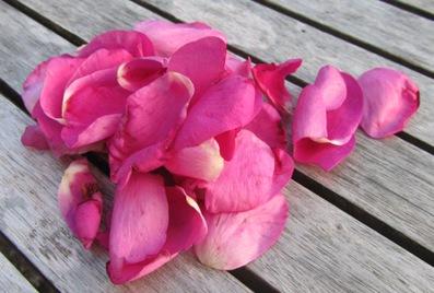 Rosenblätter der Kartoffelrose