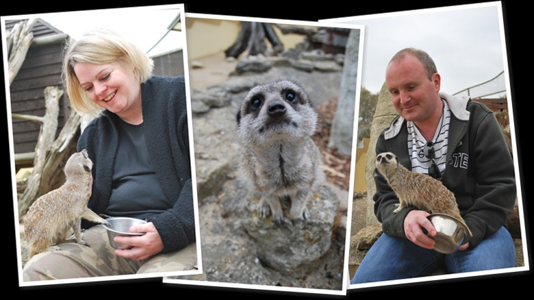 View Roy & Helen's Meerkat Encounter