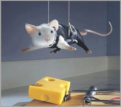 funny-animal-mouse-cheese-