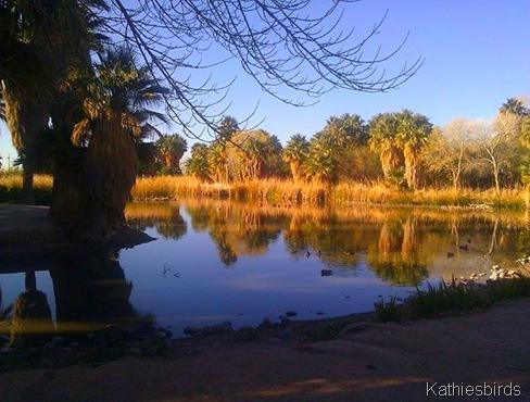 1. Agua Caliente Park pond-kab