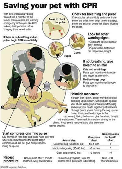 how to give dogs CPR