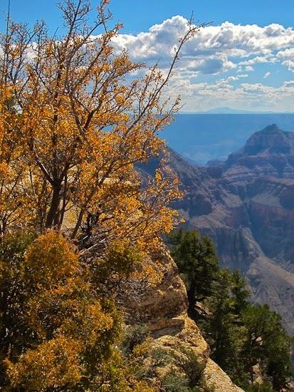 Grand Canyon North Rim (3)