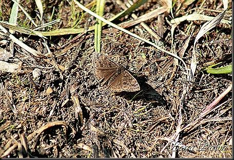 OMC_Butterfly