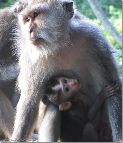Monkey Madonna