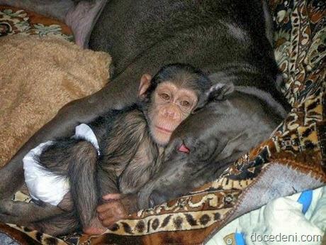 macaco e cadela7