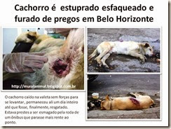 Cachorro é estuprado esfaqueado e furado de pregos