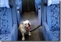 cane treno